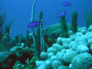 Coral reef in Puerto Rico. Credit: NOAA CCMA
