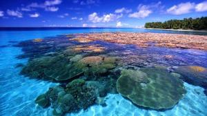 CoralReef_Majuro Atoll_FreeNaturePictures