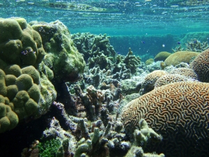 Coral reef in Ofu Lagoon, American Samoa. Credit: National Park Service