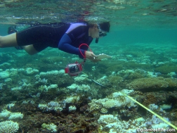 Studying coral in Guam. Credit: D. Burdick